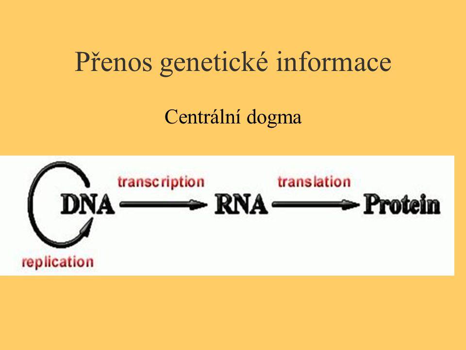 Přenos genetické informace Centrální dogma