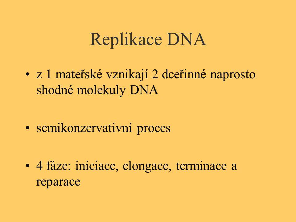 Replikace DNA z 1 mateřské vznikají 2 dceřinné naprosto shodné molekuly DNA semikonzervativní proces 4 fáze: iniciace, elongace, terminace a reparace