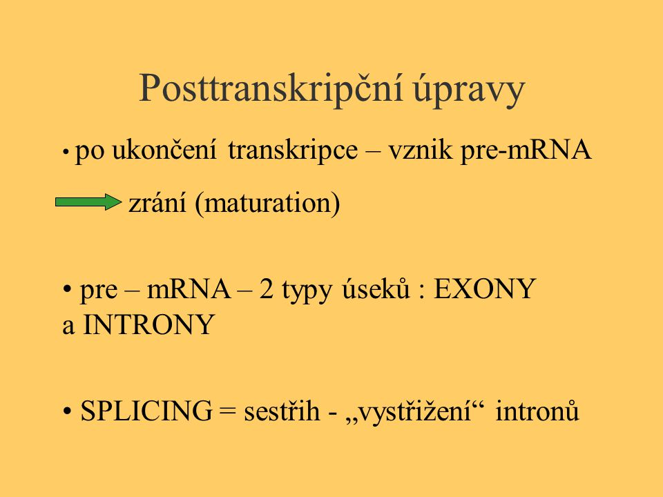 """Posttranskripční úpravy po ukončení transkripce – vznik pre-mRNA zrání (maturation) pre – mRNA – 2 typy úseků : EXONY a INTRONY SPLICING = sestřih - """""""