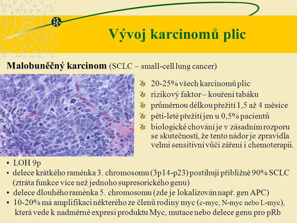 Malobuněčný karcinom (SCLC – small-cell lung cancer) LOH 9p delece krátkého raménka 3. chromosomu (3p14-p23) postihují přibližně 90% SCLC (ztráta funk