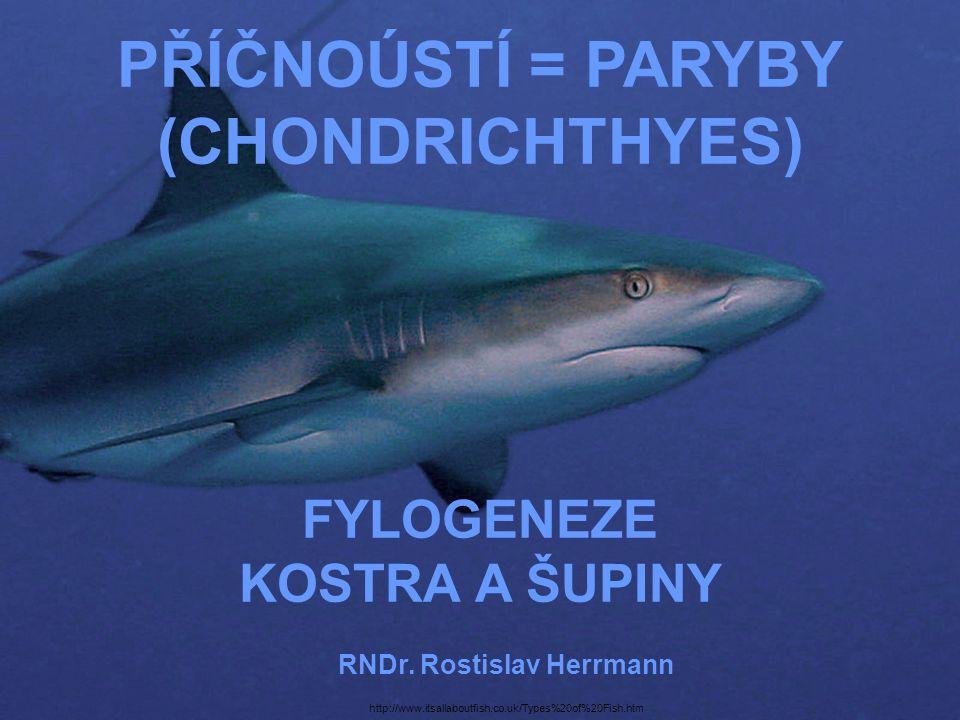 PŘÍČNOÚSTÍ = PARYBY (CHONDRICHTHYES) FYLOGENEZE KOSTRA A ŠUPINY RNDr. Rostislav Herrmann http://www.itsallaboutfish.co.uk/Types%20of%20Fish.htm