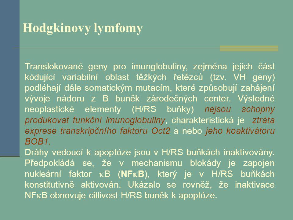Hodgkinovy lymfomy Translokované geny pro imunglobuliny, zejména jejich část kódující variabilní oblast těžkých řetězců (tzv. VH geny) podléhají dále