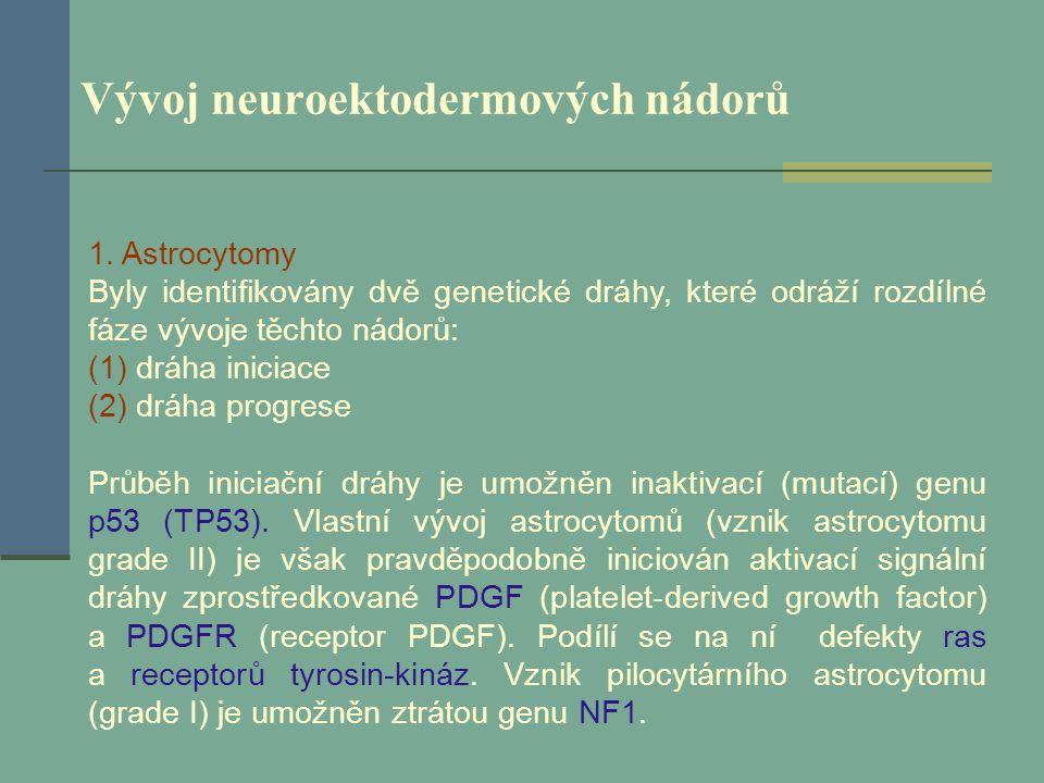 Vývoj neuroektodermových nádorů 1. Astrocytomy Byly identifikovány dvě genetické dráhy, které odráží rozdílné fáze vývoje těchto nádorů: (1) dráha ini