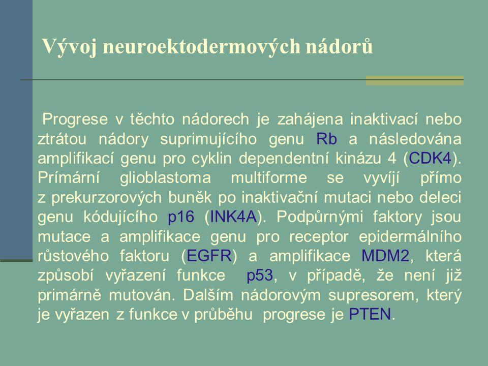 Vývoj neuroektodermových nádorů Progrese v těchto nádorech je zahájena inaktivací nebo ztrátou nádory suprimujícího genu Rb a následována amplifikací