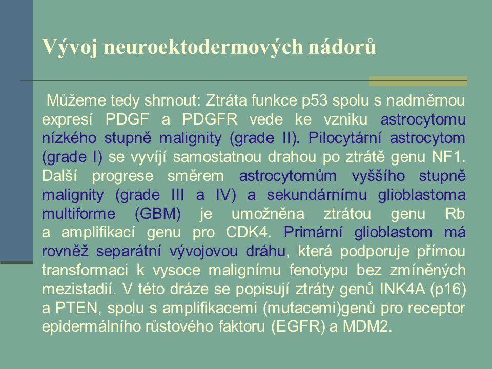Vývoj neuroektodermových nádorů Můžeme tedy shrnout: Ztráta funkce p53 spolu s nadměrnou expresí PDGF a PDGFR vede ke vzniku astrocytomu nízkého stupn