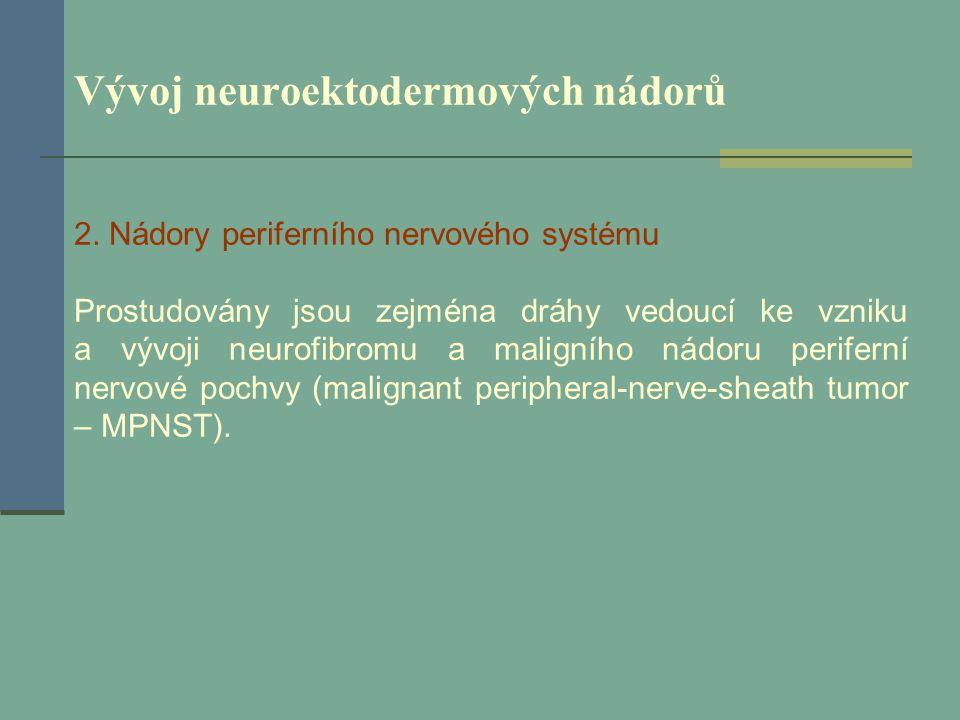 Vývoj neuroektodermových nádorů 2. Nádory periferního nervového systému Prostudovány jsou zejména dráhy vedoucí ke vzniku a vývoji neurofibromu a mali