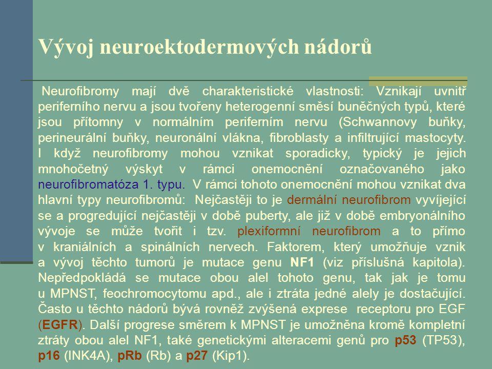 Vývoj neuroektodermových nádorů Neurofibromy mají dvě charakteristické vlastnosti: Vznikají uvnitř periferního nervu a jsou tvořeny heterogenní směsí