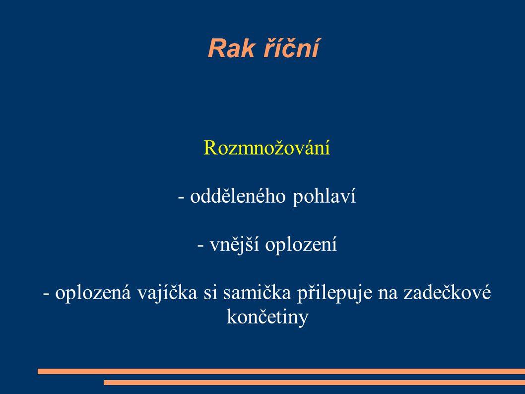 Mořské druhy korýšů garnát kreveta langusta obecný baltická obecná www.guh.cz/edu/bi/biologie_bezobratli