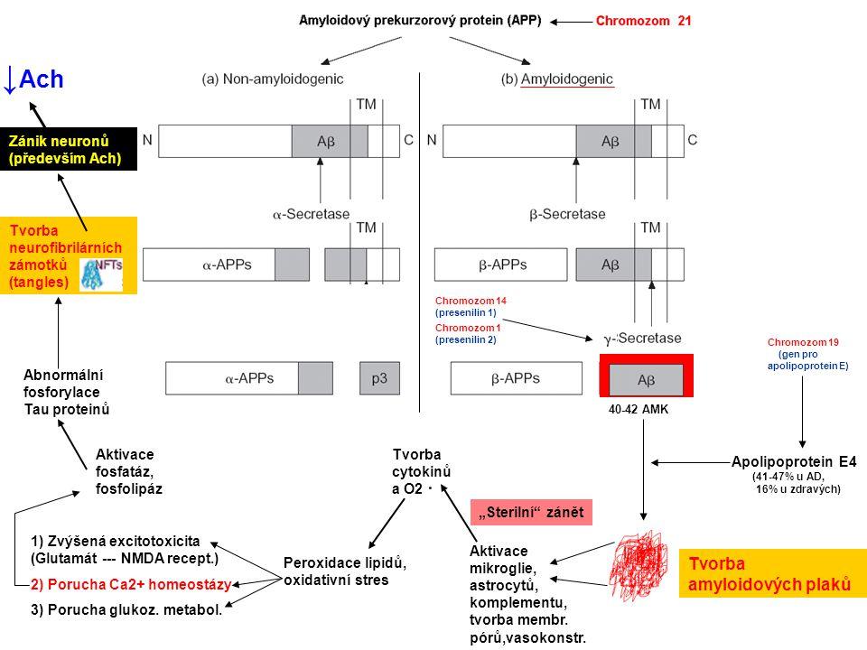 Chromozom 14 (presenilin 1) Chromozom 1 (presenilin 2) 40-42 AMK Apolipoprotein E4 (41-47% u AD, 16% u zdravých) Chromozom 19 (gen pro apolipoprotein