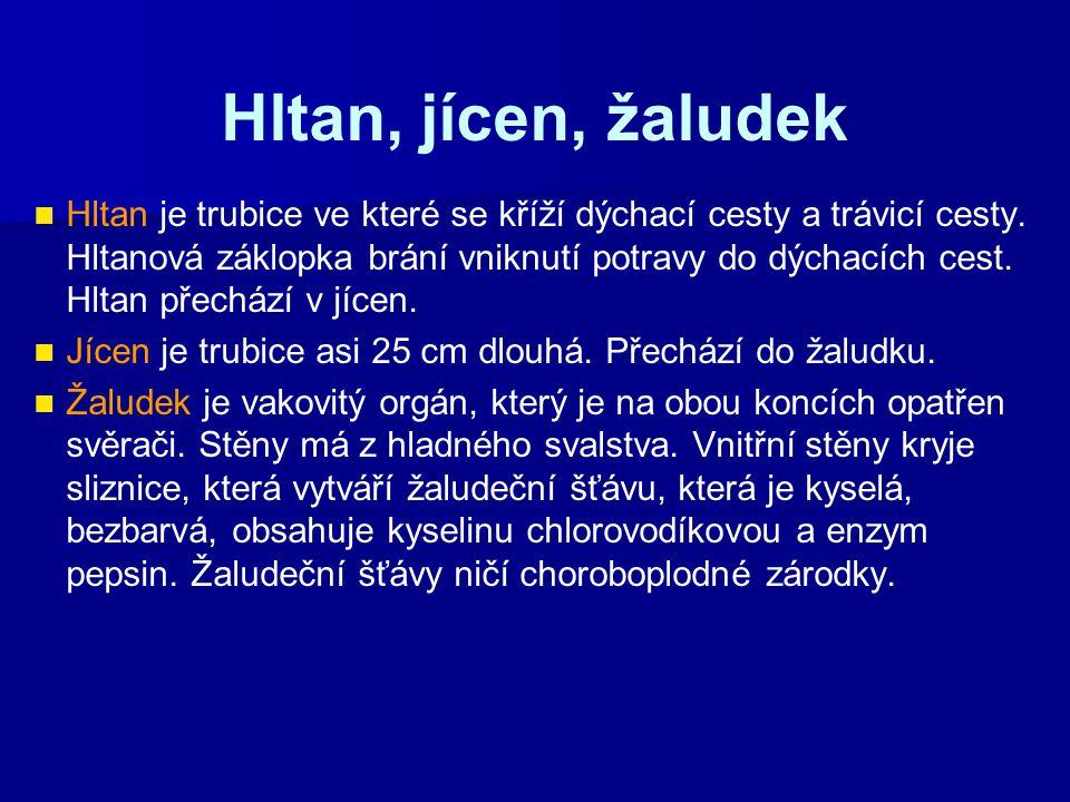 Hltan, jícen, žaludek Hltan je trubice ve které se kříží dýchací cesty a trávicí cesty. Hltanová záklopka brání vniknutí potravy do dýchacích cest. Hl
