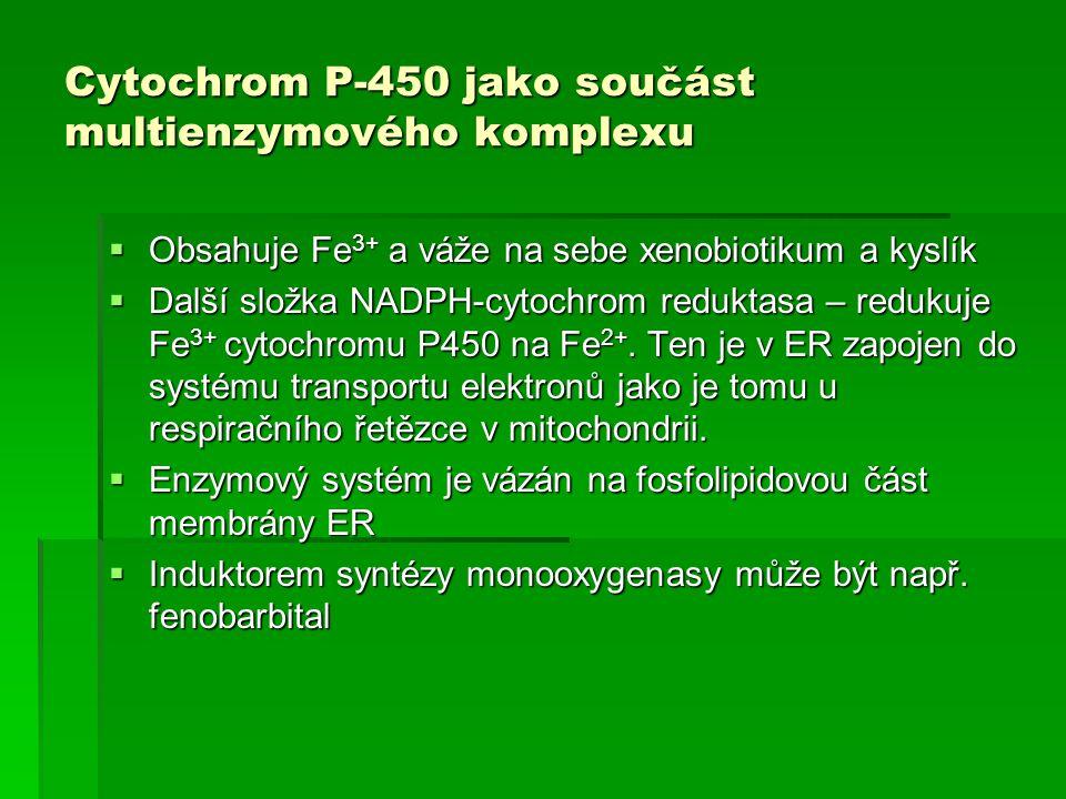 Cytochrom P-450 jako součást multienzymového komplexu  Obsahuje Fe 3+ a váže na sebe xenobiotikum a kyslík  Další složka NADPH-cytochrom reduktasa –