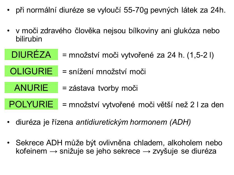 při normální diuréze se vyloučí 55-70g pevných látek za 24h. v moči zdravého člověka nejsou bílkoviny ani glukóza nebo bilirubin DIURÉZA OLIGURIE ANUR