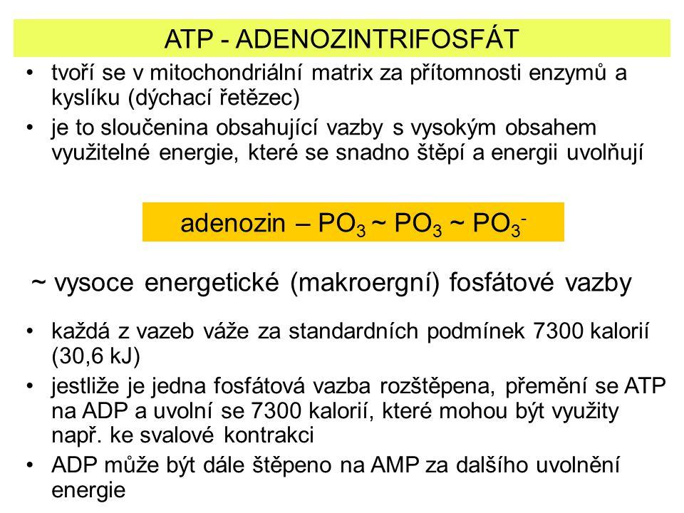 ATP - ADENOZINTRIFOSFÁT tvoří se v mitochondriální matrix za přítomnosti enzymů a kyslíku (dýchací řetězec) je to sloučenina obsahující vazby s vysoký