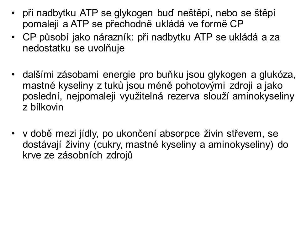 při nadbytku ATP se glykogen buď neštěpí, nebo se štěpí pomaleji a ATP se přechodně ukládá ve formě CP CP působí jako nárazník: při nadbytku ATP se uk