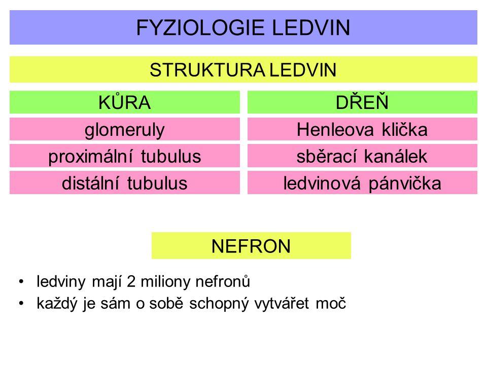 FYZIOLOGIE LEDVIN STRUKTURA LEDVIN KŮRADŘEŇ glomerulyHenleova klička proximální tubulus distální tubulus sběrací kanálek ledvinová pánvička NEFRON led