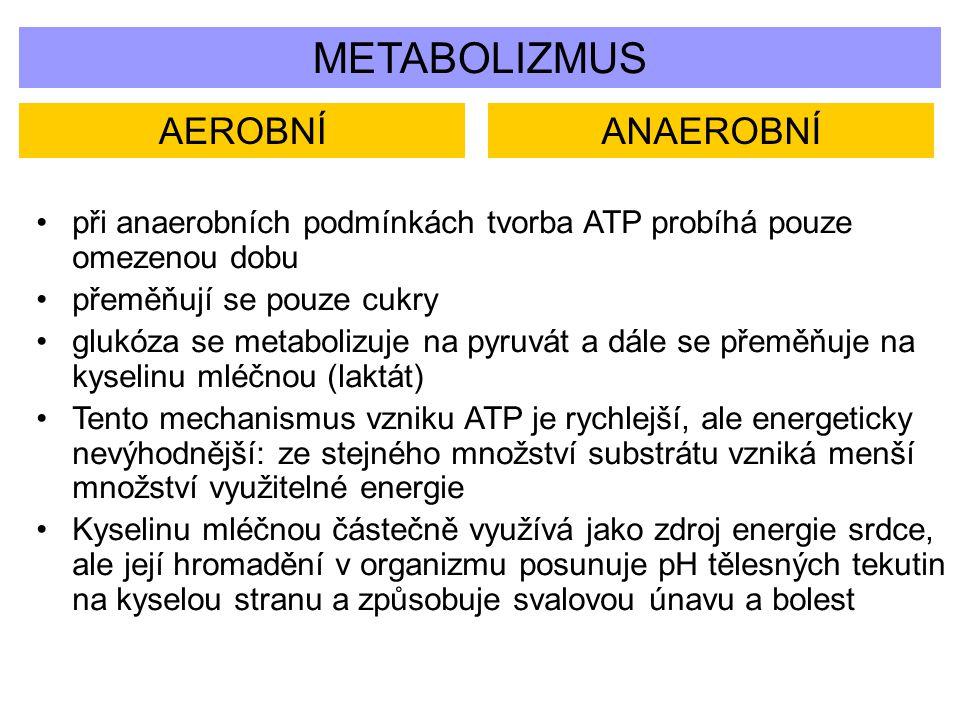 METABOLIZMUS AEROBNÍANAEROBNÍ při anaerobních podmínkách tvorba ATP probíhá pouze omezenou dobu přeměňují se pouze cukry glukóza se metabolizuje na py