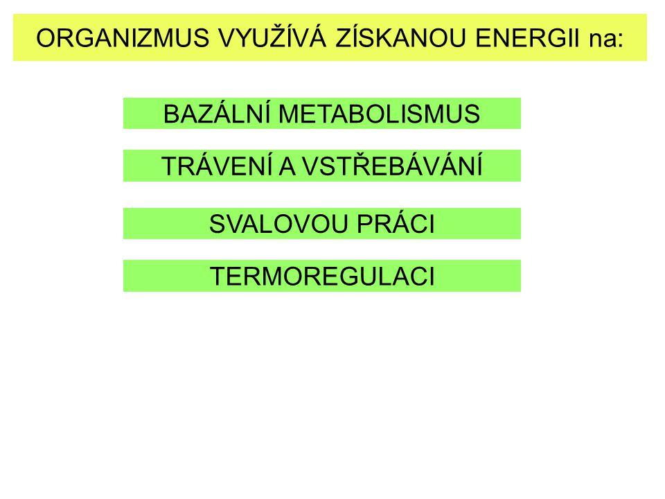 ORGANIZMUS VYUŽÍVÁ ZÍSKANOU ENERGII na: BAZÁLNÍ METABOLISMUS TRÁVENÍ A VSTŘEBÁVÁNÍ SVALOVOU PRÁCI TERMOREGULACI