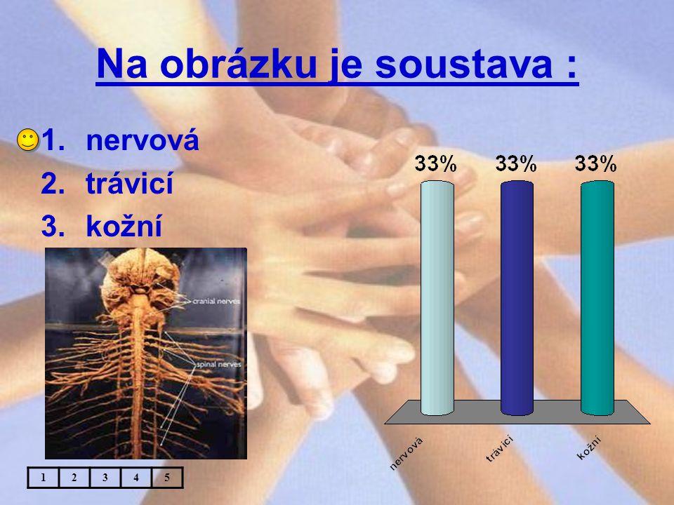 Na obrázku je soustava : 1.nervová 2.trávicí 3.kožní 12345