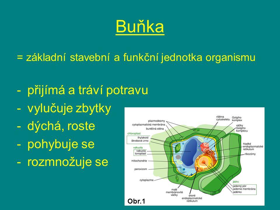 Buňka = základní stavební a funkční jednotka organismu -přijímá a tráví potravu -vylučuje zbytky -dýchá, roste -pohybuje se -rozmnožuje se Obr.1
