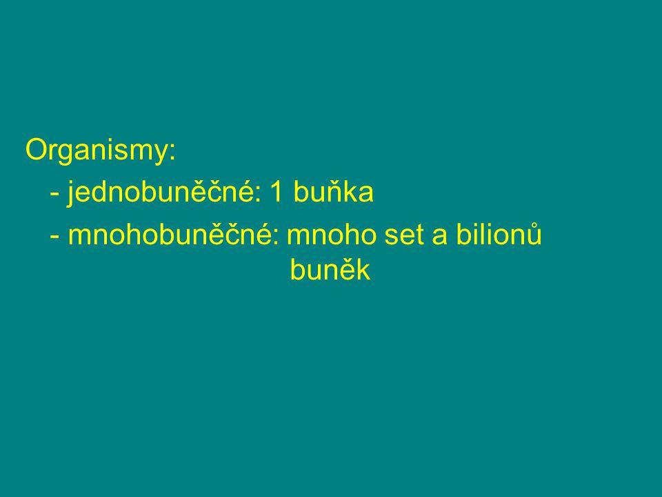 Organismy: - jednobuněčné: 1 buňka - mnohobuněčné: mnoho set a bilionů buněk