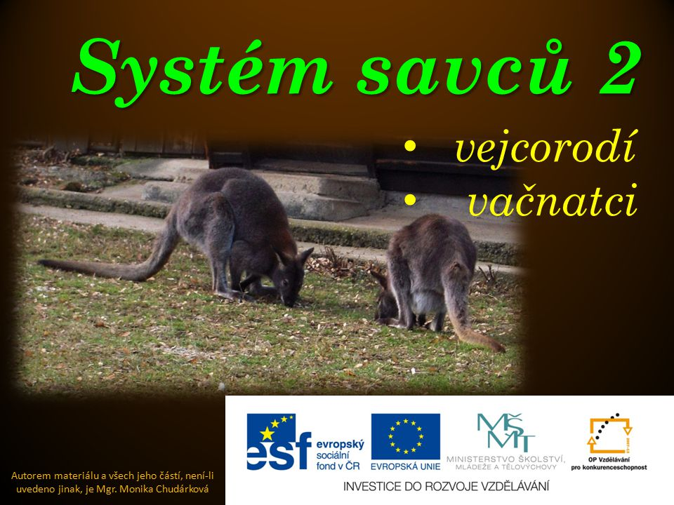 Systém savců 2 Autorem materiálu a všech jeho částí, není-li uvedeno jinak, je Mgr. Monika Chudárková vejcorodí vačnatci