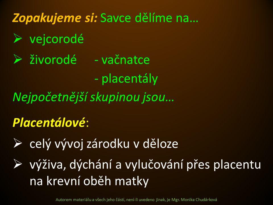 Autorem materiálu a všech jeho částí, není-li uvedeno jinak, je Mgr. Monika Chudárková Zopakujeme si: Savce dělíme na…  vejcorodé  živorodé- vačnatc