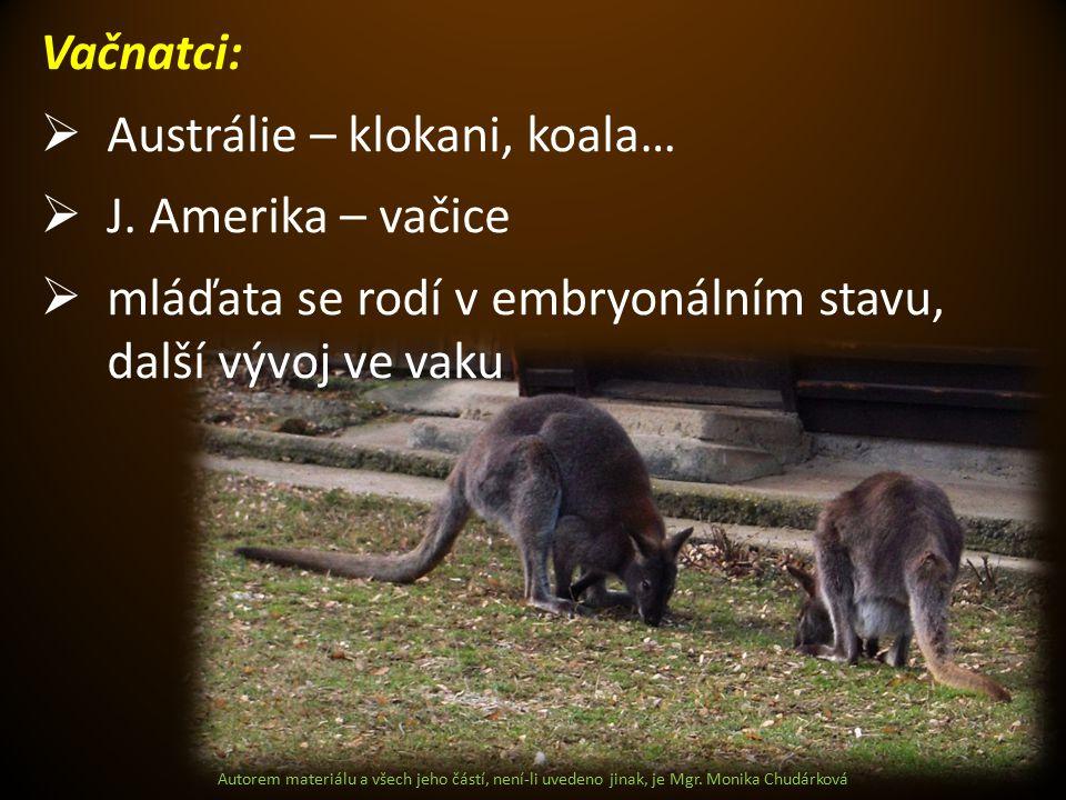 Autorem materiálu a všech jeho částí, není-li uvedeno jinak, je Mgr. Monika Chudárková Vačnatci:  Austrálie – klokani, koala…  J. Amerika – vačice 