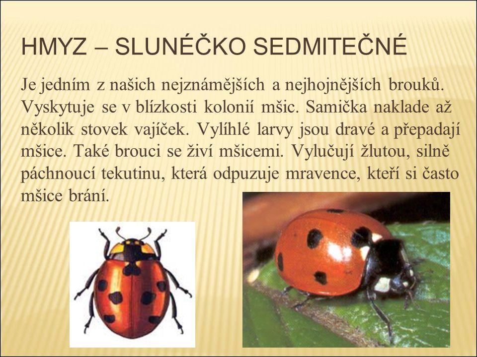 HMYZ – SLUNÉČKO SEDMITEČNÉ Je jedním z našich nejznámějších a nejhojnějších brouků. Vyskytuje se v blízkosti kolonií mšic. Samička naklade až několik
