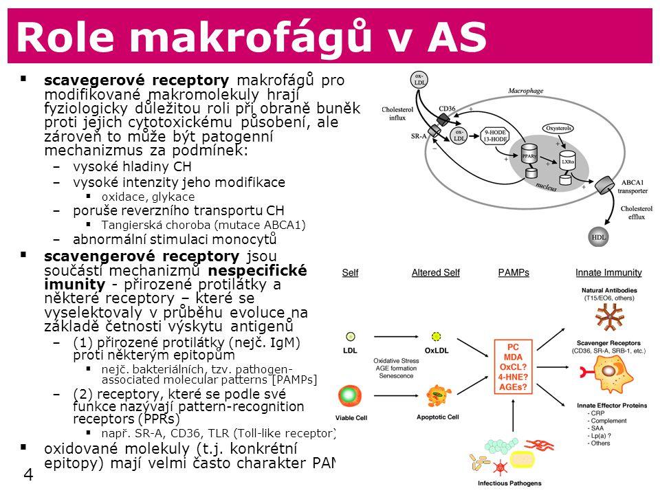 4 Role makrofágů v AS  scavegerové receptory makrofágů pro modifikované makromolekuly hrají fyziologicky důležitou roli při obraně buněk proti jejich cytotoxickému působení, ale zároveň to může být patogenní mechanizmus za podmínek: –vysoké hladiny CH –vysoké intenzity jeho modifikace  oxidace, glykace –poruše reverzního transportu CH  Tangierská choroba (mutace ABCA1) –abnormální stimulaci monocytů  scavengerové receptory jsou součástí mechanizmů nespecifické imunity - přirozené protilátky a některé receptory – které se vyselektovaly v průběhu evoluce na základě četnosti výskytu antigenů –(1) přirozené protilátky (nejč.