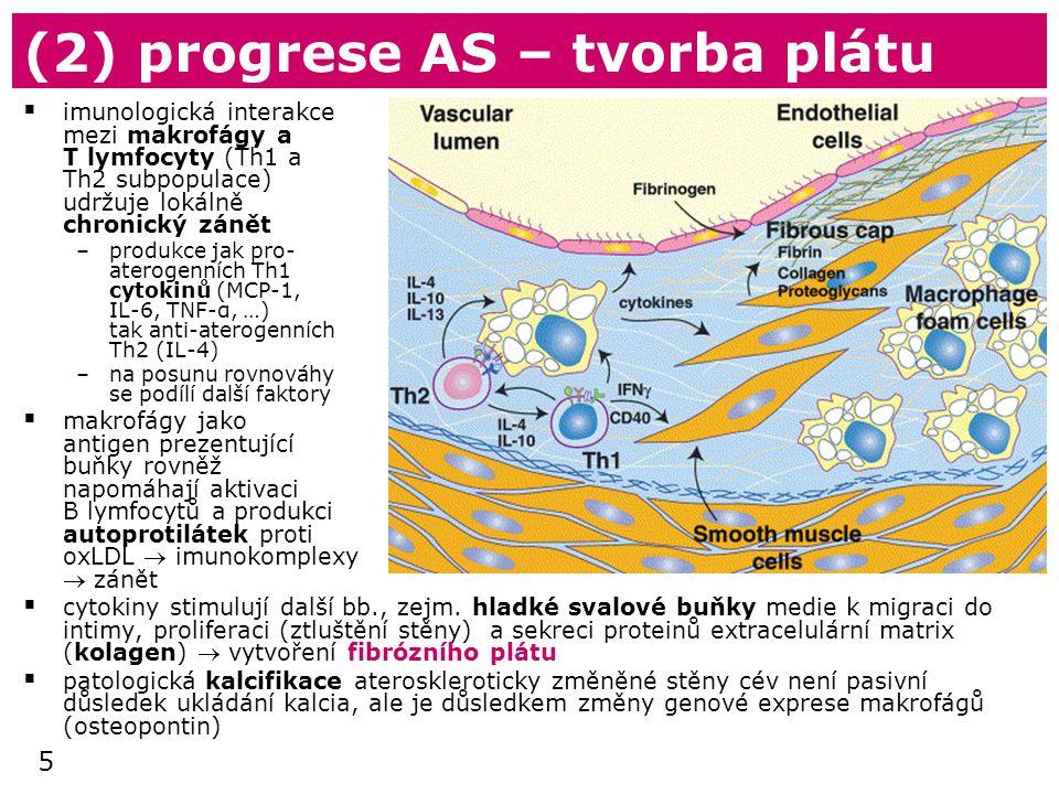 5 (2) progrese AS – tvorba plátu  imunologická interakce mezi makrofágy a T lymfocyty (Th1 a Th2 subpopulace) udržuje lokálně chronický zánět –produkce jak pro- aterogenních Th1 cytokinů (MCP-1, IL-6, TNF-α, …) tak anti-aterogenních Th2 (IL-4) –na posunu rovnováhy se podílí další faktory  makrofágy jako antigen prezentující buňky rovněž napomáhají aktivaci B lymfocytů a produkci autoprotilátek proti oxLDL  imunokomplexy  zánět  cytokiny stimulují další bb., zejm.