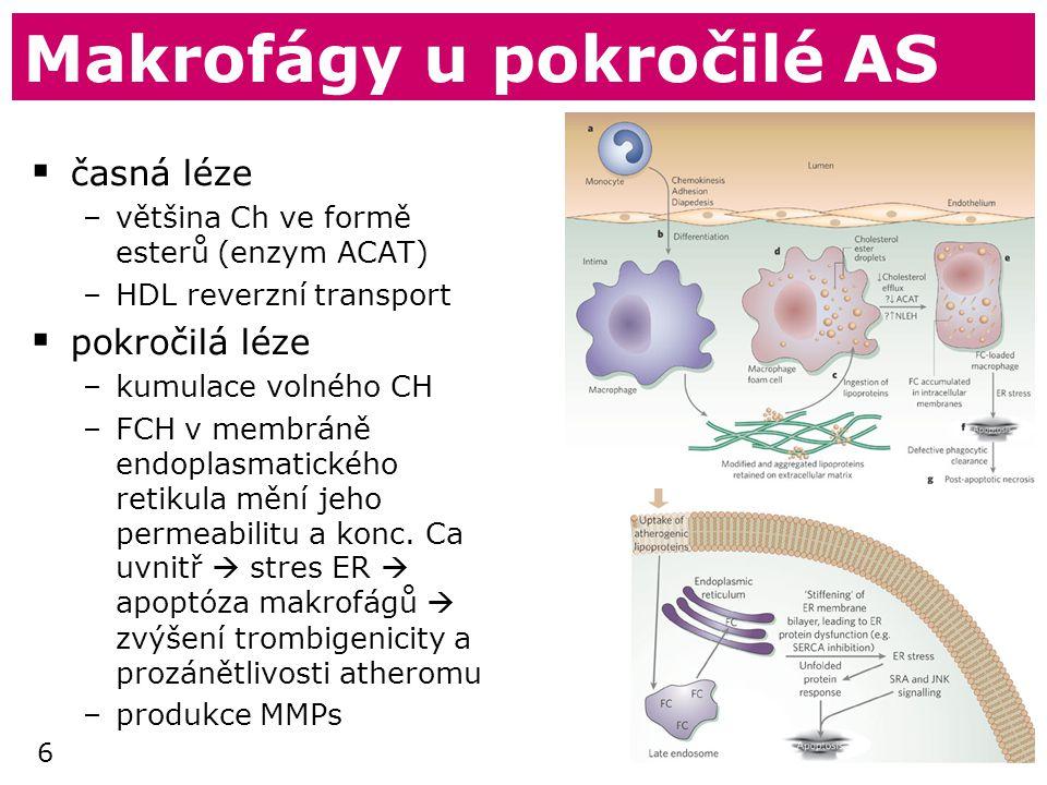 6 Makrofágy u pokročilé AS  časná léze –většina Ch ve formě esterů (enzym ACAT) –HDL reverzní transport  pokročilá léze –kumulace volného CH –FCH v membráně endoplasmatického retikula mění jeho permeabilitu a konc.