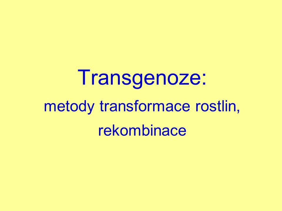 Transgenoze: metody transformace rostlin, rekombinace