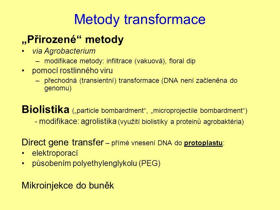 """Metody transformace """"Přirozené"""" metody via Agrobacterium –modifikace metody: infiltrace (vakuová), floral dip pomocí rostlinného viru –přechodná (tran"""