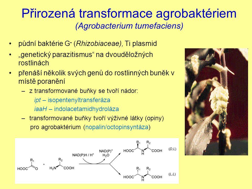 "Přirozená transformace agrobaktériem (Agrobacterium tumefaciens) půdní baktérie G - (Rhizobiaceae), Ti plasmid ""genetický parazitismus"" na dvouděložný"