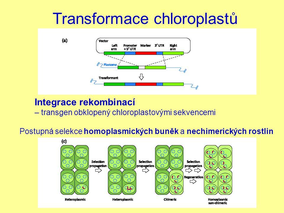 Transformace chloroplastů Integrace rekombinací – transgen obklopený chloroplastovými sekvencemi Postupná selekce homoplasmických buněk a nechimerický