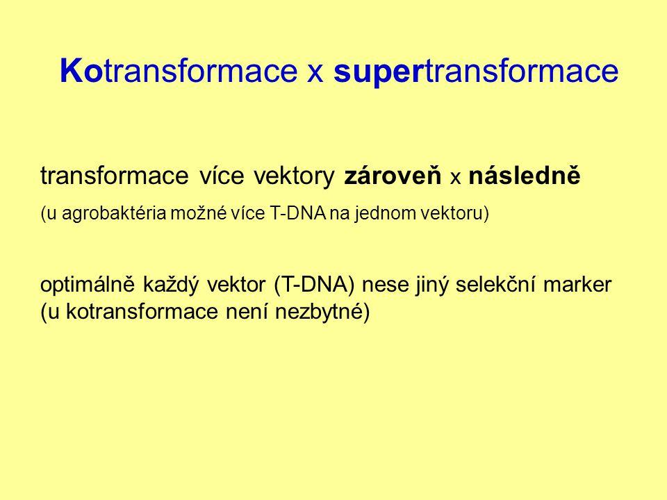 Kotransformace x supertransformace transformace více vektory zároveň x následně (u agrobaktéria možné více T-DNA na jednom vektoru) optimálně každý ve