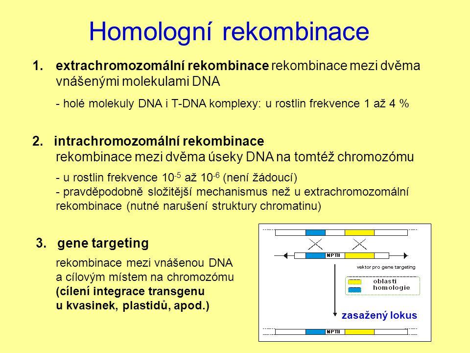 Homologní rekombinace 1.extrachromozomální rekombinace rekombinace mezi dvěma vnášenými molekulami DNA - holé molekuly DNA i T-DNA komplexy: u rostlin