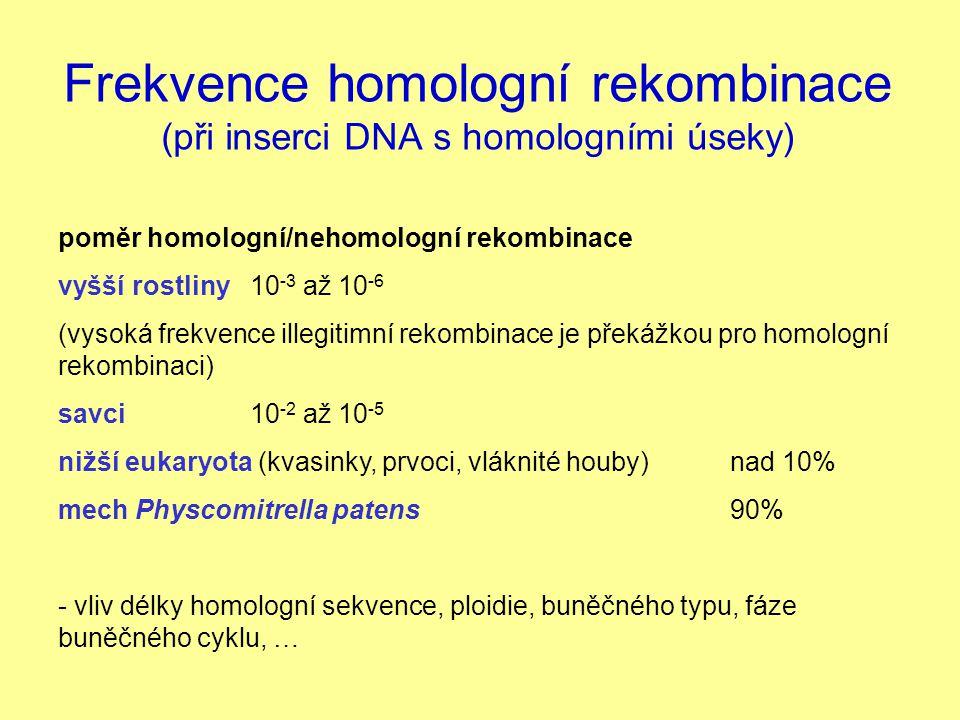 Frekvence homologní rekombinace (při inserci DNA s homologními úseky) poměr homologní/nehomologní rekombinace vyšší rostliny 10 -3 až 10 -6 (vysoká fr