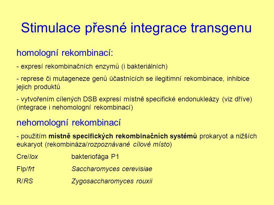 Stimulace přesné integrace transgenu homologní rekombinací: - expresí rekombinačních enzymů (i bakteriálních) - represe či mutageneze genů účastnících