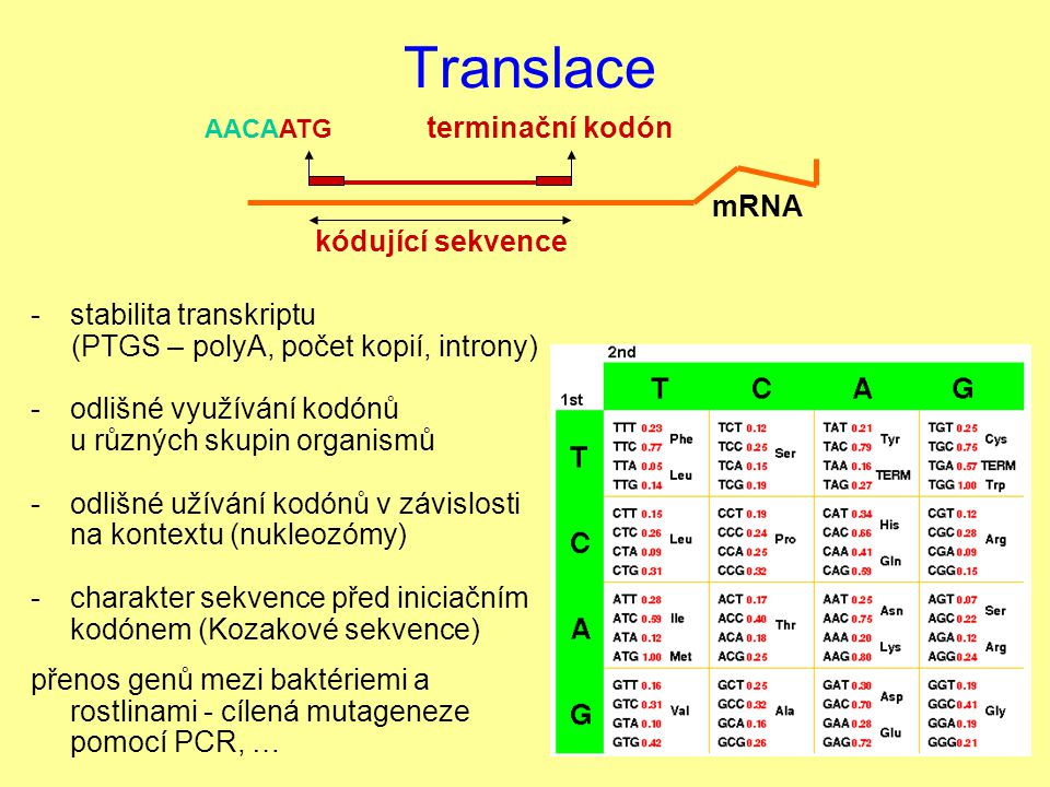 Translace -stabilita transkriptu (PTGS – polyA, počet kopií, introny) -odlišné využívání kodónů u různých skupin organismů -odlišné užívání kodónů v z