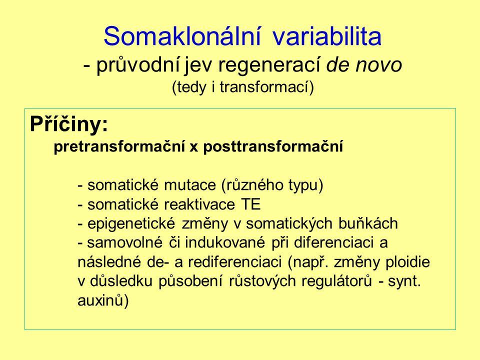 Somaklonální variabilita - průvodní jev regenerací de novo (tedy i transformací) Příčiny: pretransformační x posttransformační - somatické mutace (růz