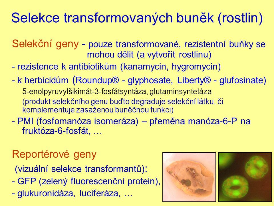 Selekční markery genprodukt genuprincip selekce selekční agens nptIIneomycinfosfotransferázakanamycin hpthygromycinfosfotransferázahygromycin dhfrdihydrofolátreduktázarezistence k antibiotiku methotrexát blevazebný protein bleomycinubleomycin catchloramfenikolacetyltransferázachloramfenikol barfosfinotricinacetyltransferázafosfinotricin (glufosinát) EPSP CP4 bakteriální 5-enolpyruvylšikimát- 3-fosfátsyntáza rezistence k herbicidu glyfosát deh1dehalogenázadalapon
