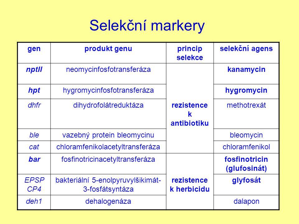 Selekční markery genprodukt genuprincip selekce selekční agens nptIIneomycinfosfotransferázakanamycin hpthygromycinfosfotransferázahygromycin dhfrdihy