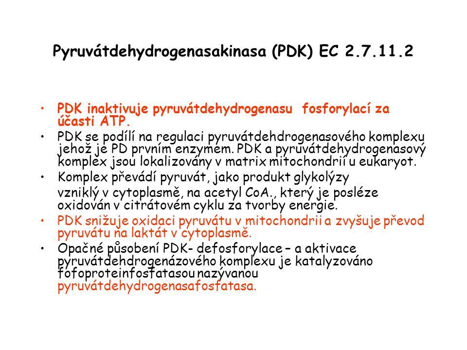 Pyruvátdehydrogenasakinasa (PDK) EC 2.7.11.2 PDK inaktivuje pyruvátdehydrogenasu fosforylací za účasti ATP. PDK se podílí na regulaci pyruvátdehdrogen