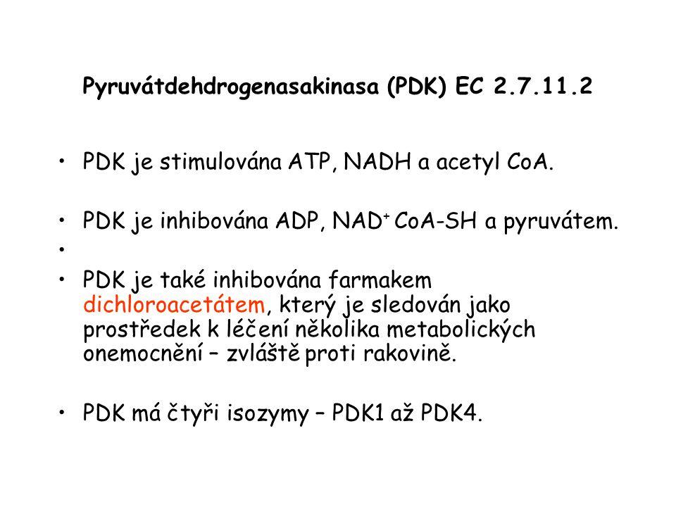 Pyruvátdehdrogenasakinasa (PDK) EC 2.7.11.2 PDK je stimulována ATP, NADH a acetyl CoA. PDK je inhibována ADP, NAD + CoA-SH a pyruvátem. PDK je také in