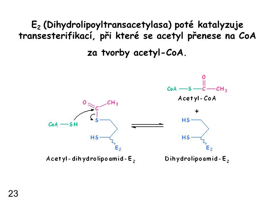 E 2 (Dihydrolipoyltransacetylasa) poté katalyzuje transesterifikací, při které se acetyl přenese na CoA za tvorby acetyl-CoA. 23