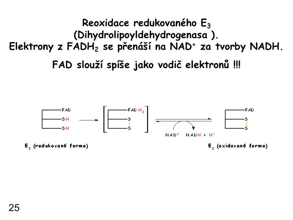 Reoxidace redukovaného E 3 (Dihydrolipoyldehydrogenasa ). Elektrony z FADH 2 se přenáší na NAD + za tvorby NADH. FAD slouží spíše jako vodič elektronů