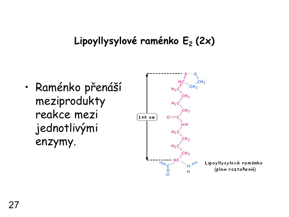 Lipoyllysylové raménko E 2 (2x) Raménko přenáší meziprodukty reakce mezi jednotlivými enzymy. 27