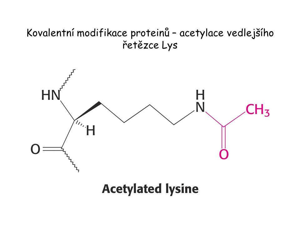 Reoxidace redukovaného E 3 (Dihydrolipoyldehydrogenasa ).