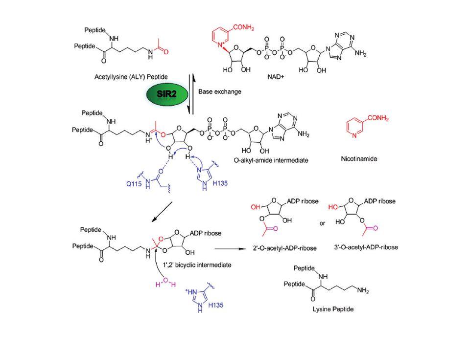 Pyruvátdehydrogenasa (E 1 ) Pyruvát dekarboxyluje za tvorby hydroxyethyl-TPP meziproduktu. 20